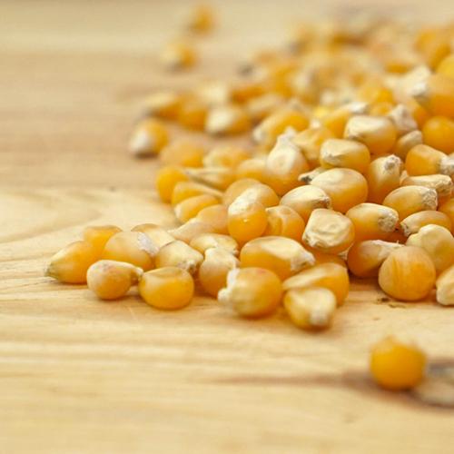 popcorn-grani
